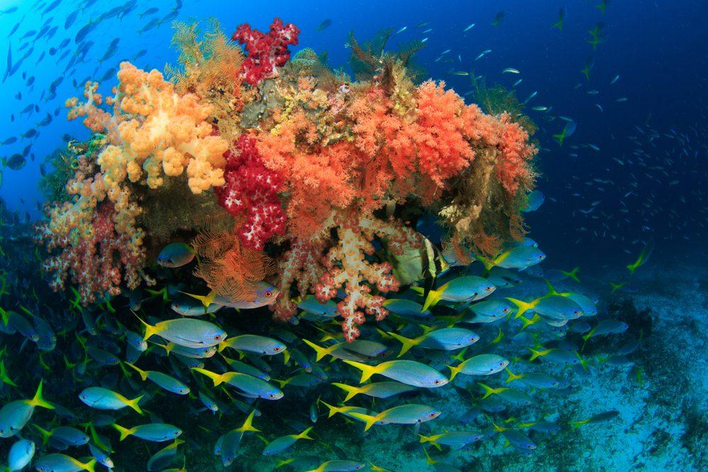 Coral Reef: Raja Ampat