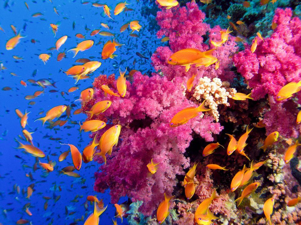 Coral Reef: Rainbow Reef