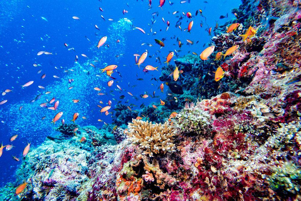 Maldives Coral Reef