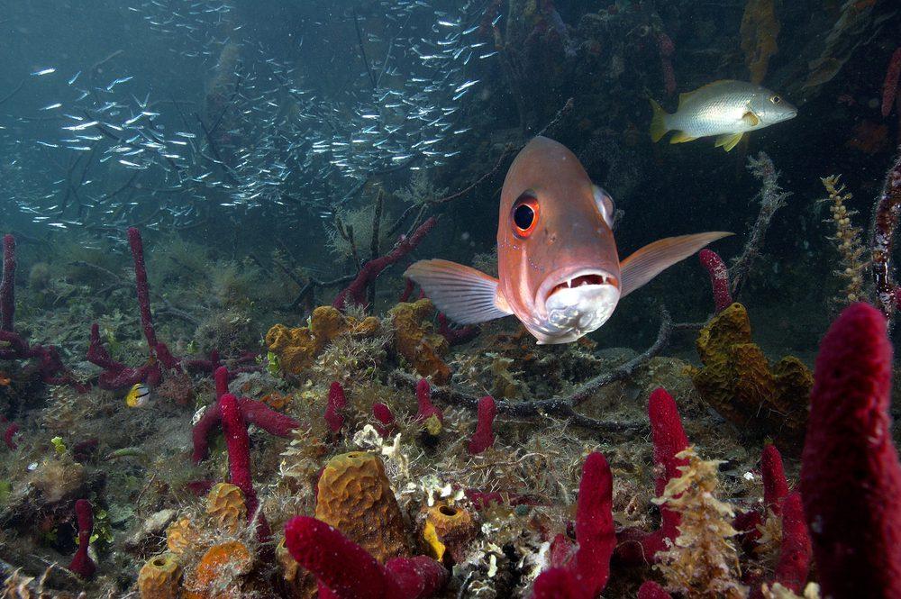 Coral Reef: Belize Barrier Reef