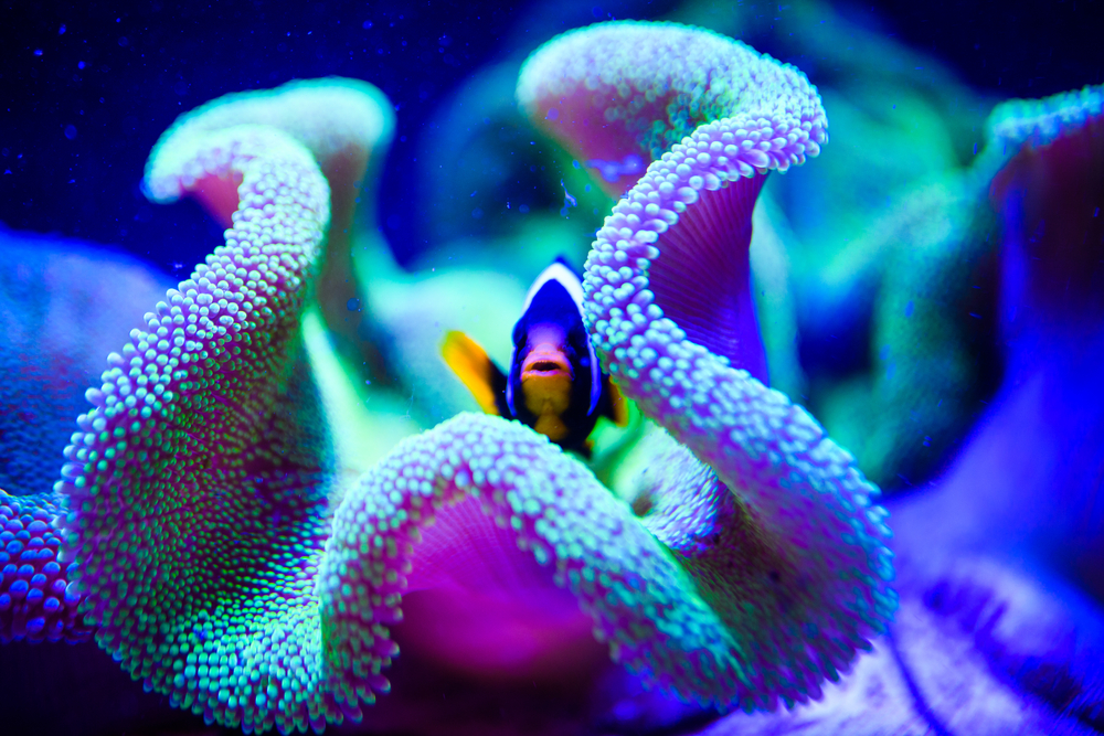 Coral Reef: Great Barrier Reef