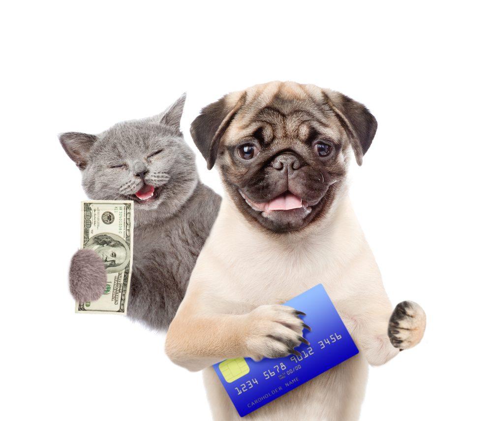 Negotate Credit Card Debt 2020
